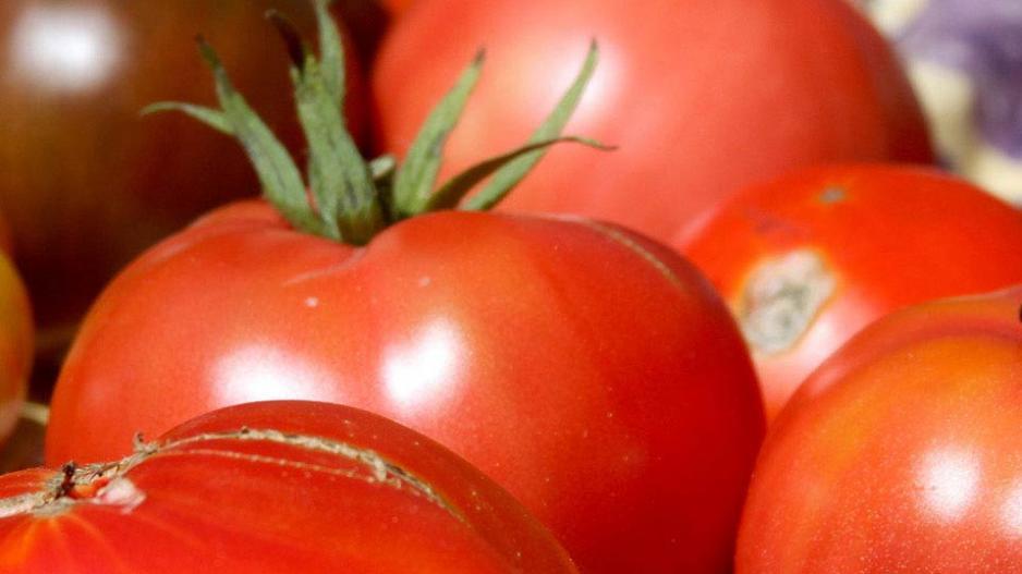Ripe tomatoes of varying colors