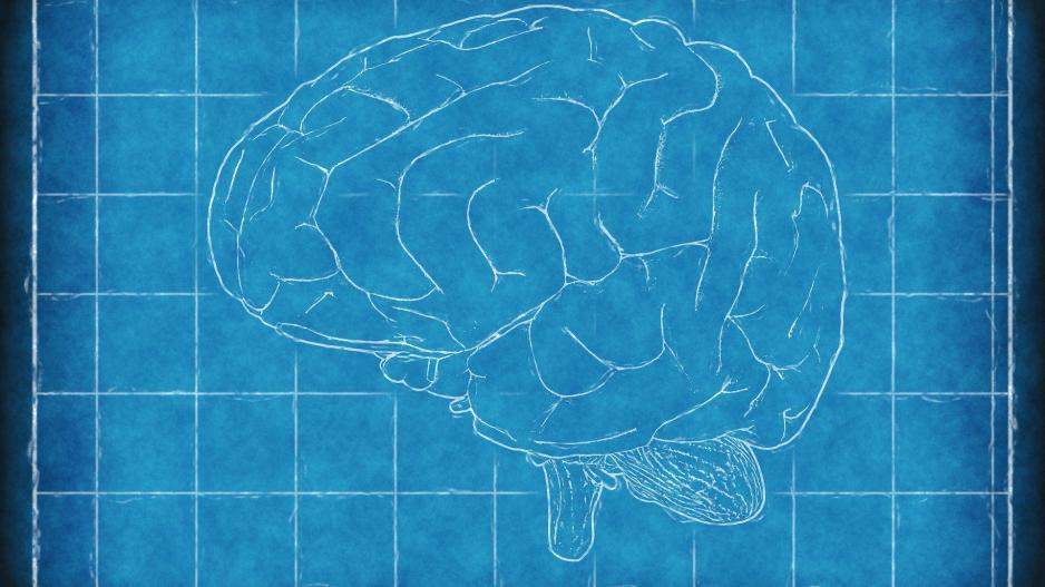 A sketch of a brain onto of a blue gridded background.