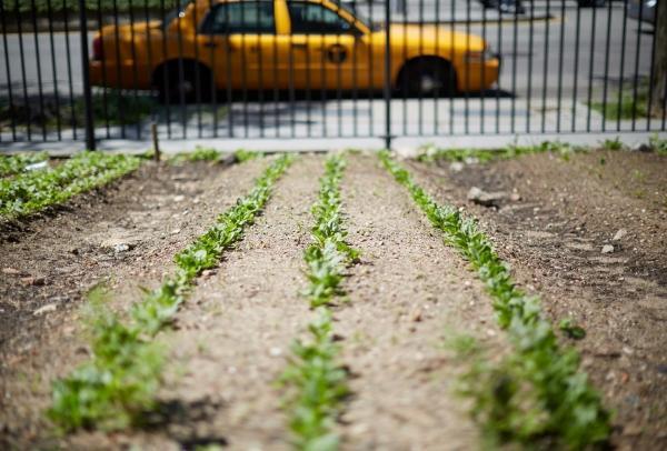 Nutrition and Food Studies | NYU Steinhardt