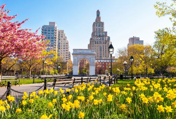 Washington Square park on a bright spring day with daffodils in the foreground